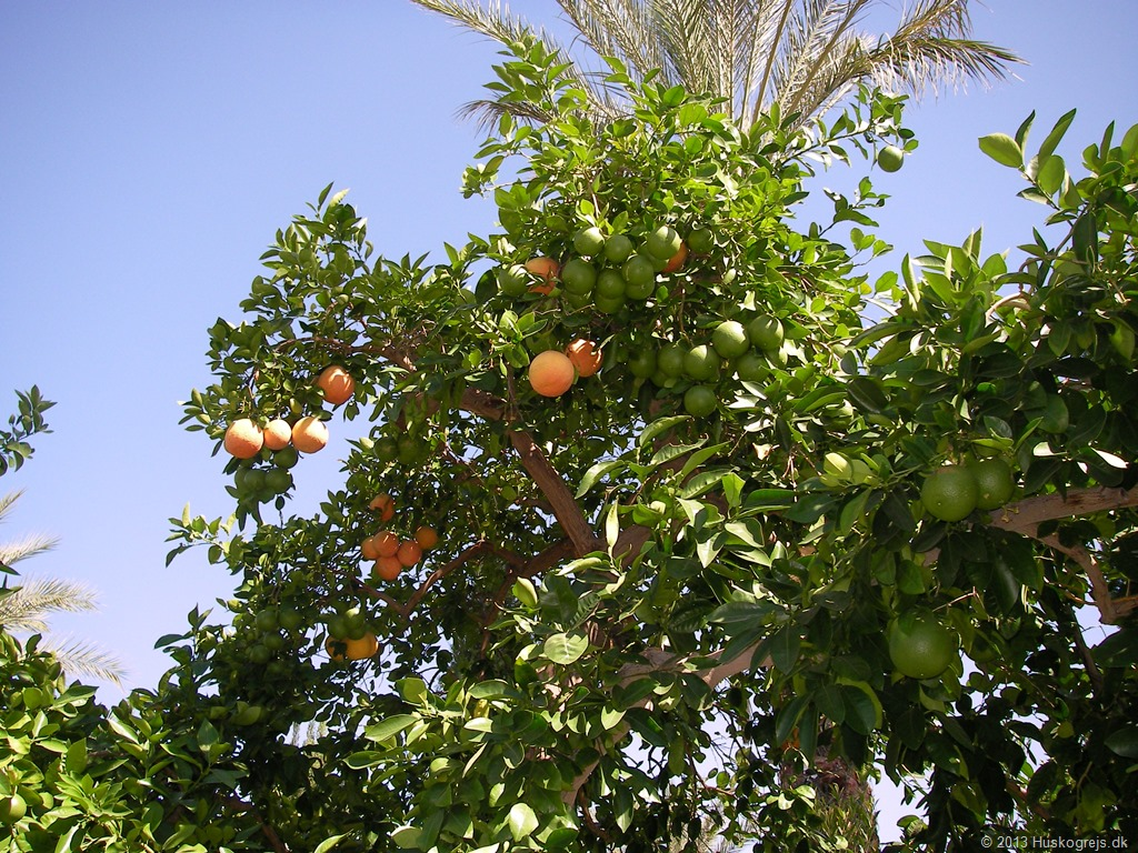 Håber ikke at for mange appelsiner er ødelagte, for de er lækre.